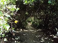 O pequeno caminho para o Prumirim!