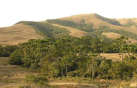 Floresta de araucárias - Natureza emoldura as diversas trilhas
