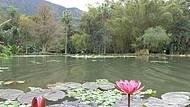 Jd. Botânico Muito Verde