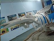 Diversos esqueletos marinhos. Vale a pena conhecer!