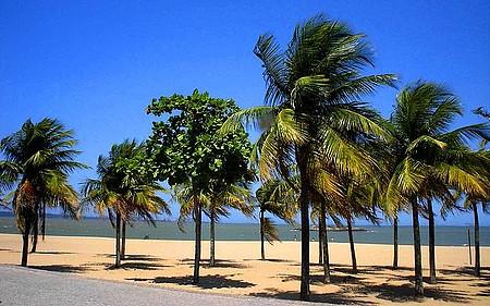 Curtir as praias - Lindo coqueiros enfeitam a orla.