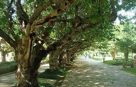 Parque da cidade - Caminhada ao ar livre