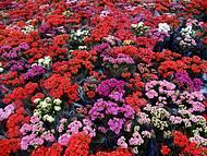 Flores do Garden Center