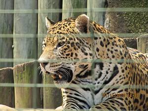 Parque Ecológico: Mais de 500 animais dão vida ao espaço<br>