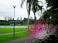 As cores do Parque na cidade ecológica