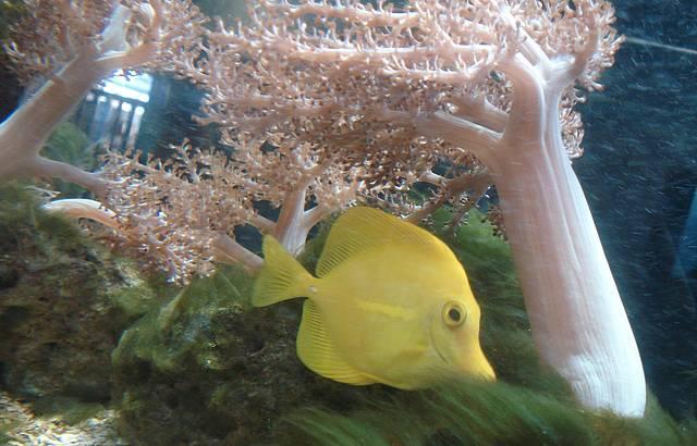 Peixe em um dos aqu�rios (lindo demais!)