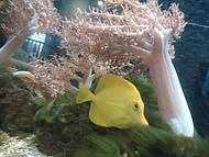 Peixe em um dos aquários (lindo demais!)