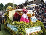 Flores colorem carros durante desfiles