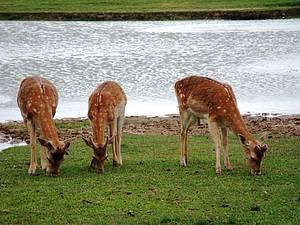 Pampa Safari: Espaço abriga mais de dois mil animais <br>