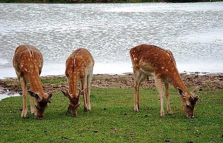 Pampa Safari - Espaço abriga mais de dois mil animais