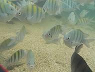 Peixinhos das piscinas naturais