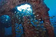 Naufrágios formam recifes artificias repletos de peixes