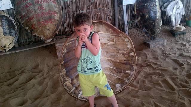 Casco de tartaruga que foi encontrada morta na praia