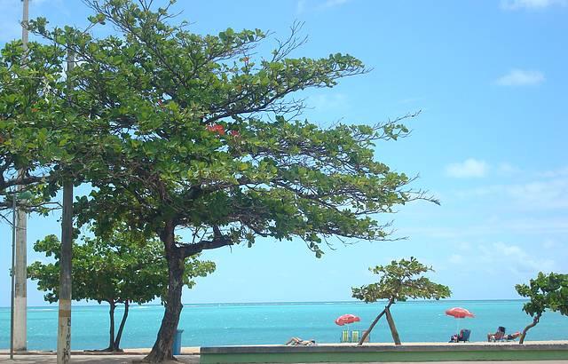 Praia de Paju�ara: Azul do C�u, azul do mar!