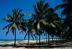Nas praias: Jangada e bugue s�o os meios de transporte oficiais! -