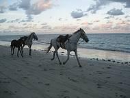 Cavalos andando livres na Quarta Praia