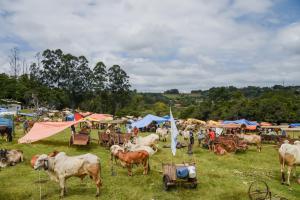 Zona Rural - Lomba Grande