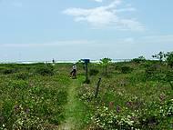 Chegando a praia deserta pela trilha