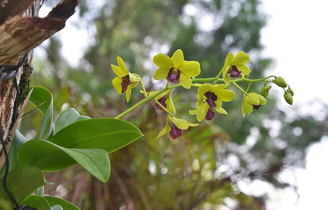 Orquídeas são estrelas na primavera