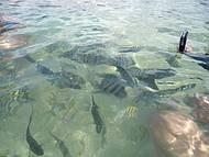 Peixes Fotogênicos