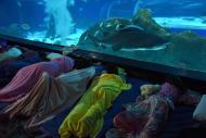 Dormindo no AquaRio!