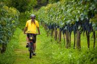 Que tal explorar a Serra Gaúcha de bike?