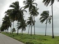 Mar e Coqueiral à beira da estrada