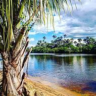 Belo rio é emoldurado por buritis