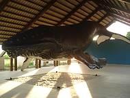 Instituto da Baleia Jubarte