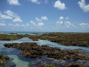 Camboinha: Corais no paraíso! -