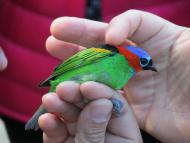 Observação de pássaros é acompanhada por biólogos na Fazenda Bananal, em Paraty