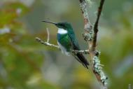 Birdwatching em alta!