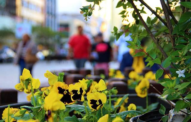 No centro de Curitiba, o charme e a beleza da Rua das Flores